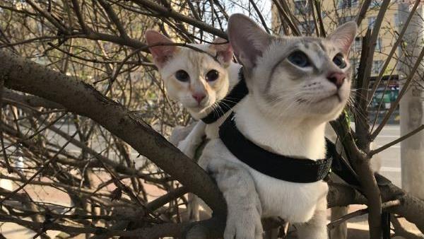 為了追女伴!胖貓爬20米樹下不來…消防車用「水炮」救援