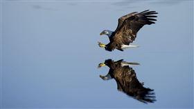 老鷹,鳥,猛禽(示意圖/翻攝自Pixabay)
