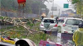 南投,路樹,倒塌,受傷(圖/翻攝畫面)