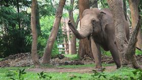 大象(示意圖/翻攝自Pixabay) https://pixabay.com/photos/wild-elephant-angry-elephant-4273708/