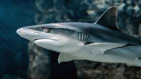鯊魚,海豚,攻擊,(圖/翻攝自PIXABAY