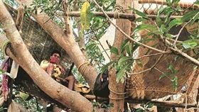 家裡沒房間…7印度人「睡樹上隔離」!村民站崗防野獸攻擊 圖/翻攝 @metesohtaoglu 推特