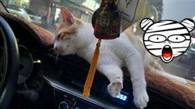 愛貓車上打滾…他順手一拍竟「靈異照」!千人朝聖全嚇壞(圖/翻攝自靈異公社)