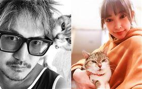 許維恩愛貓過世…KID悼念喊「我愛你」:生命中重要一段(圖/翻攝自KID、許維恩IG)