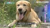 生命無價 褚興中立志培訓災難搜救犬