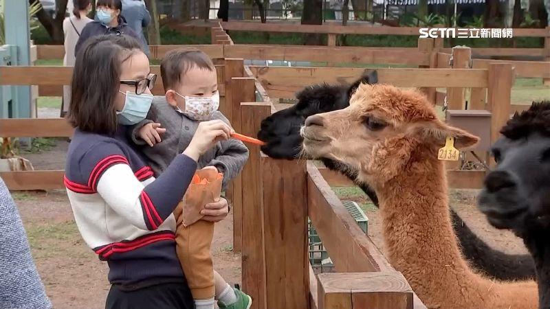 埔心牧場吸親子客 和療癒水豚君互動