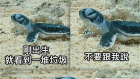 海巡署幫海龜設計對白,有網友形容「笑著笑著就哭了」(圖/翻攝自臉書海巡署長室 Coast Guard)