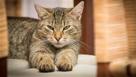 貓示意圖 翻攝自Pixabay