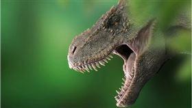 暴龍,恐龍,REX(圖/翻攝自Pixabay)