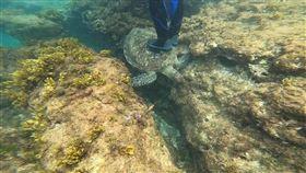 小琉球,浮潛,海龜,遊客,海巡署(翻攝自 爆料公社)
