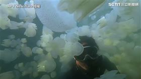 ▲Anun Choochaisri到泰國浮潛時遇到上百隻的水母。(圖/AP/Newsflare 授權)