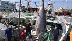 屏東,東港,第一鮪,拍賣,黑鮪魚
