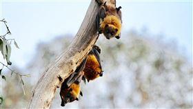 華郵14日指出,美駐北京人員兩年前曾示警華府,中國武漢病毒研究所旗下蝙蝠冠狀病毒研究恐引發類SARS大流行疾病。(示意圖/圖取自Unsplash圖庫)