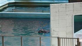 「最孤獨海豚」病逝!水族館倒閉…牠遭遺棄水池孤獨到死(圖/翻攝自Dolphin project官網)