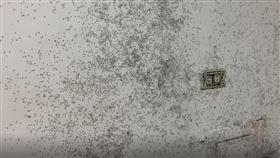 螞蟻大軍,黑團,牆上,睡覺,全身發癢,噁心,天災