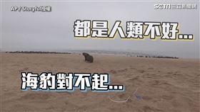 ▲人類時常亂丟垃圾進而影響到動物的生命。(圖/AP/Storyful授權)
