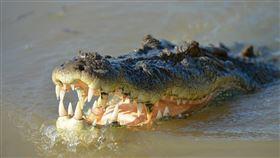 河邊釣魚…兒遭鱷魚咬走!勇媽「徒手插鼻孔」牠秒窒息鬆口(圖/翻攝自Pixabay)