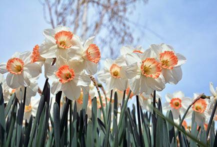花謝花飛花滿天,明日花絕成花神