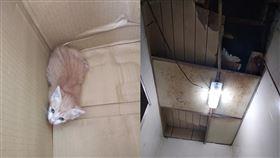 天花板,小奶貓,流浪貓,新台幣,肉圓,老店(翻攝自 爆怨公社)
