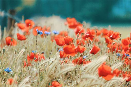 《寶島神很大》求神拜佛備鮮花