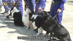 俗話說得好,狗是人類最忠誠的朋友。(圖/三立新聞台YT畫面)