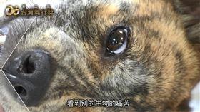 (圖/三立新聞台YT畫面)