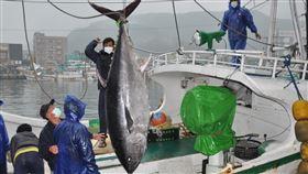 宜蘭第一鮪上岸 25日拍賣宜蘭蘇澳籍漁船「全昌隆168號」22日捕獲一尾巨大黑鮪魚,船隻23日進港後經秤重為200公斤,經鑑定後符合「宜蘭第一鮪」標準,將於25日公開拍賣。中央社記者沈如峰宜蘭攝 109年4月23日
