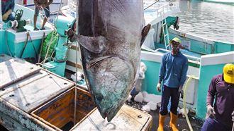 漁業外銷急凍 鮪魚首度列補助