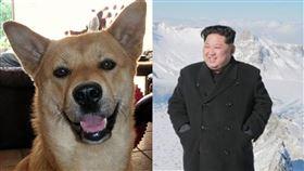 北韓,犬決,金正恩,死刑,犬種