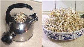 她用「水壺」種出白白胖胖豆芽菜 成功秘訣只有一個(圖/翻攝自我愛全聯-好物老實説)