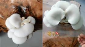 一週沒進辦公室 桌上竟長出2朵蘑菇(圖/翻攝自微博)