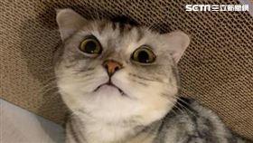 貓咪,毛小孩,貓,可愛(圖/翻攝自IG咪咪的咪)需要授權