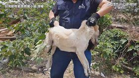 ▲浪犬讓救援小組圍捕許久。(圖/台灣動物緊急救援小組 授權)