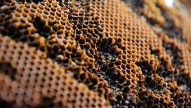 蜂巢。(圖/翻攝自unsplash)