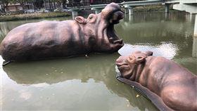 新竹動物園 河馬 樂樂 (讀者提供)