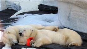 北極熊、熊(示意圖/翻攝自PIXABAY)
