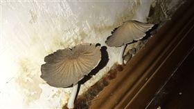 浴室牆角長出菇菇怎辦?這1招秒清除(圖/翻攝自PTT)