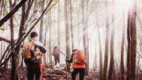 親近大自然,提升免疫力,可從「谷關七雄」群山步道開始。(圖/台中市政府觀光旅遊局提供)