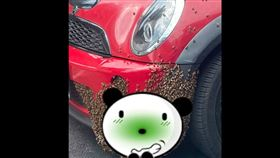 蜜蜂,車子,保險桿,築巢,蜂后,女王蜂,移巢