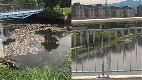 連日高溫,河川溶氧量過低,大台北地區等河川,均出現魚群暴斃問題。(圖/翻攝自爆料公社)