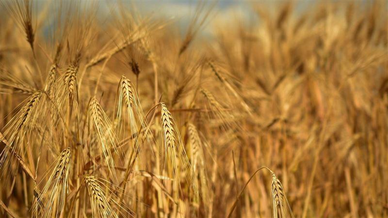 陸官媒膨風「糧食夠百萬人吃半年」遭打臉:只能撐12天