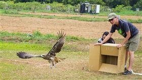 部分在台灣的黑鳶可能是候鳥(1)屏東科技大學鳥類研究室最近在1隻小黑鳶身上裝追蹤器,牠不但飛越中部「結界」,還飛到中國,「部分黑鳶可能是候鳥」震驚鳥界。(屏科大鳥類研究室提供)中央社記者郭芷瑄傳真 109年5月11日