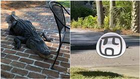 巨鱷,鱷魚,後院,院子,美國(圖/翻攝自(Fernando Lossada臉書)