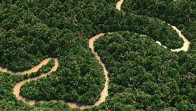 亞馬遜雨林。 (圖/翻攝自維基百科)