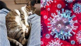 貓咪 互相 傳染 病毒