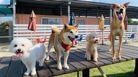 「跟著毛寶貝去旅行」為全台旅行社首創,讓毛寶貝可與主人一同出遊,全程串接寵物友善巴士、寵物友善餐廳、寵物友善旅館等,並由受過專業訓犬教育的導遊帶領,並在行程中結合寵物園遊會、寵物夏令營等趣味活動等,是市場上獨家針對寵物設計完善的主題行程。(圖/雄獅提供)