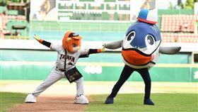 魚頭君回到台南球場和萊恩共同表演。(圖/統一獅提供)