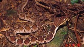 網友介紹常見的蛇(圖/翻攝自PTT)