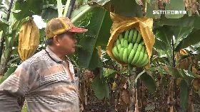 香蕉價差扯1800