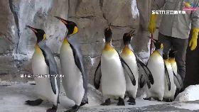 逼企鵝健走1800